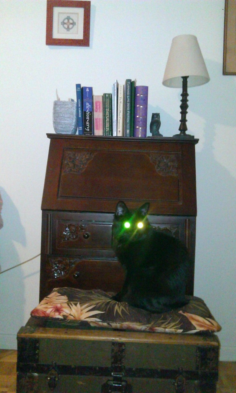 Black cat sitting at writing desk