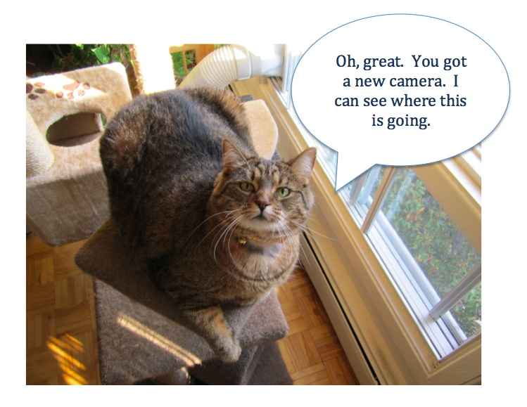 image - Geneva tabby stares down human servant using new camera