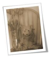 Author's Winnie Pooh Bear. Sera`s Edgar Bear