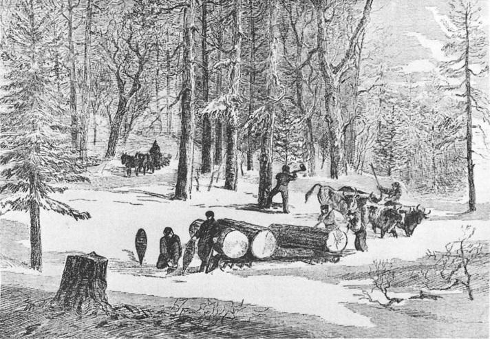 Lumbering Giant Logs