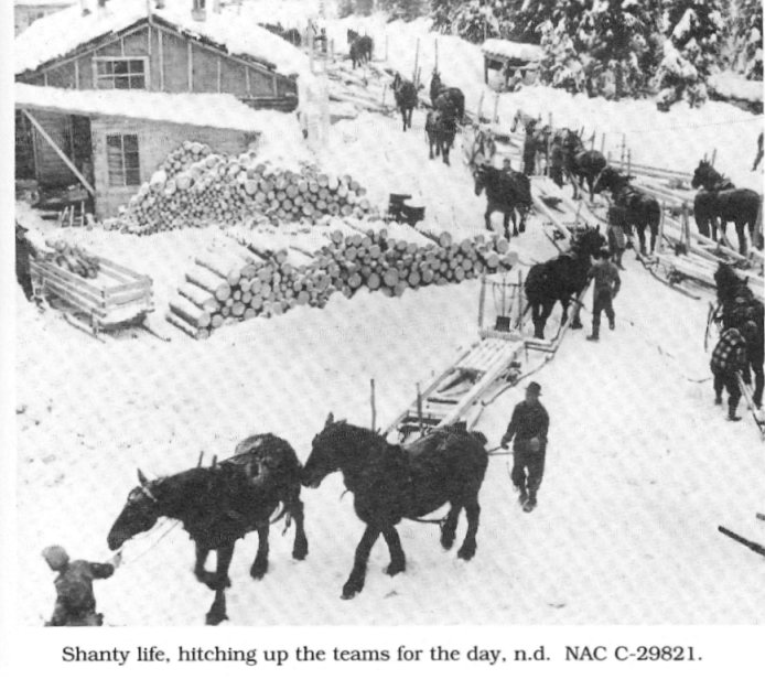 Horses working in the Lumber Trade