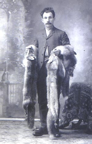 Larry Burns, the Trapper, with two Fox Pelts